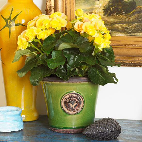 10 Gorgeous Blooming Houseplants