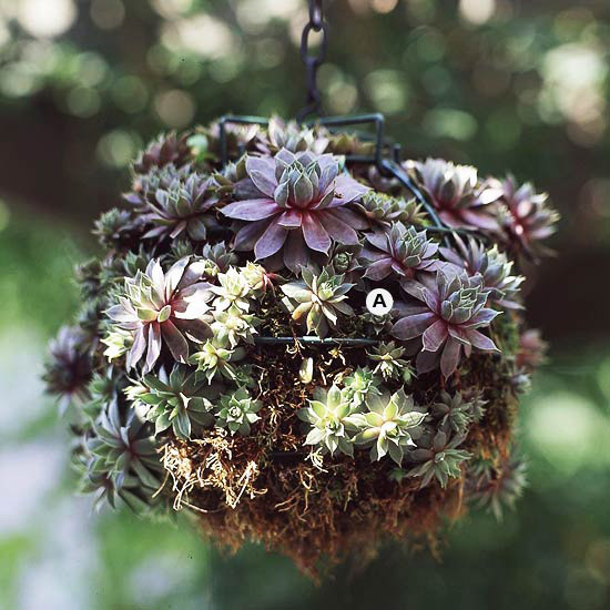 How To Make A Hanging Basket Flowers : Create stunning hanging baskets