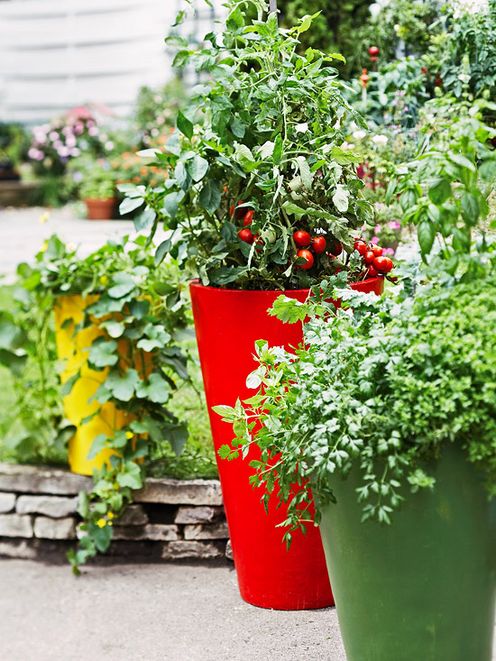 Select the Right Container Tomatoes can grow