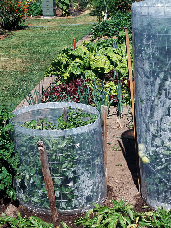 15 fun ideas for growing tomatoes for Fun vegetable garden ideas
