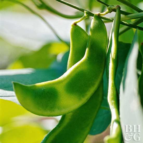Organic Gardening Benefits and Tips