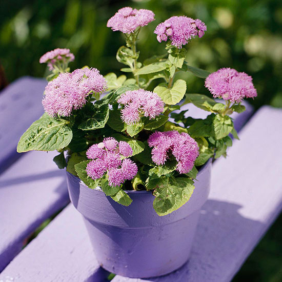 Better Homes And Gardens Sweepstakes >> Ageratum