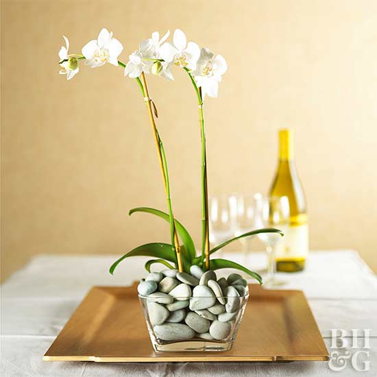 best orchid house plants.  Moth orchid