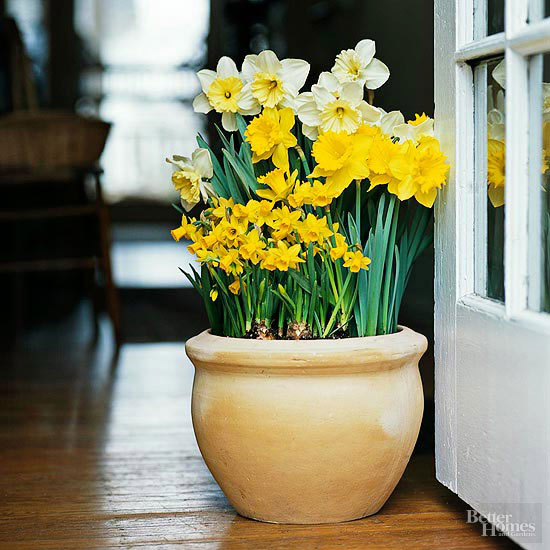 Can I Transfer Indoor Potted Bulbs to the Outdoors?