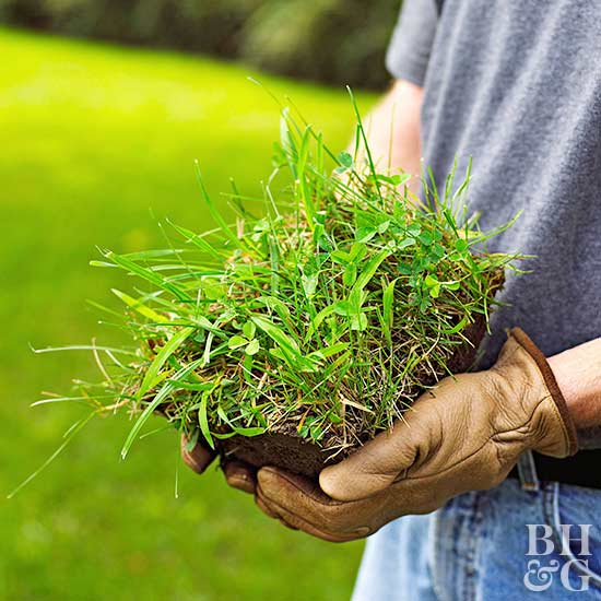how to get rid of weeds in new grass