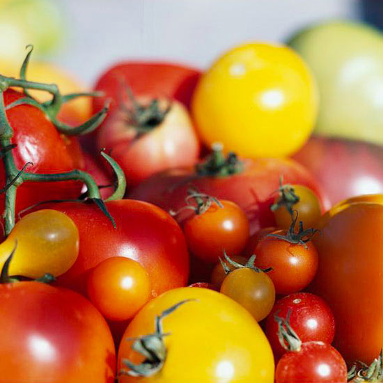 How to Successfully Plant and Grow Tomatoes