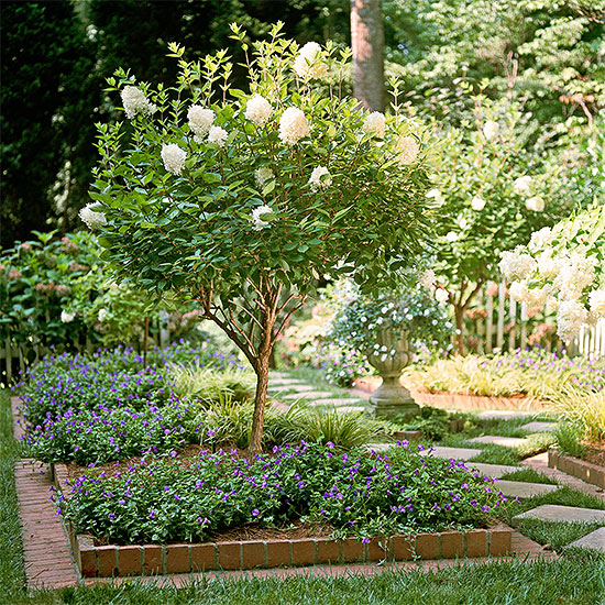 Choose the Top Hydrangeas for Your Garden