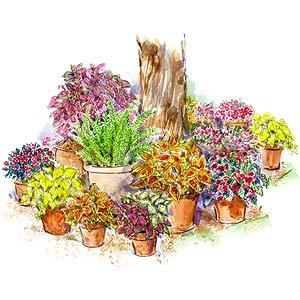 Shade Loving Container Garden Plan