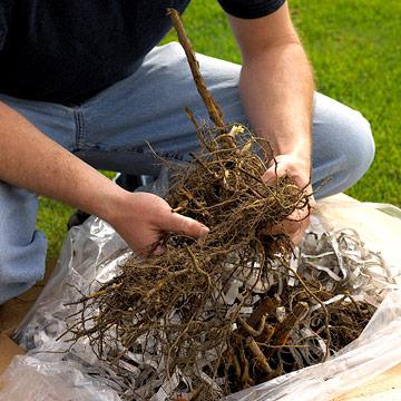 Bare-Root Trees & Shrubs