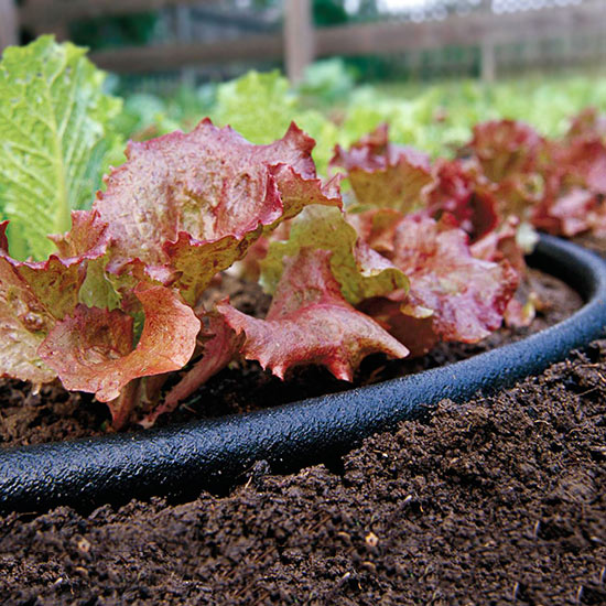 July Gardening Tips for the South