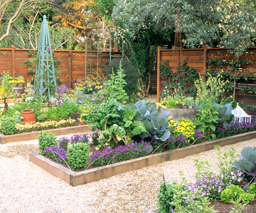 Top vegetables to grow for winter storage for Veggie patch layout