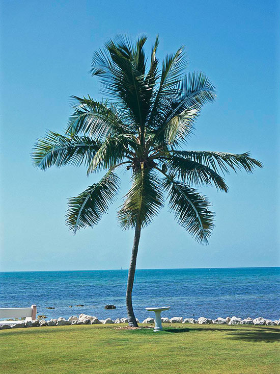 Better Homes And Gardens Sweepstakes >> Coconut palm