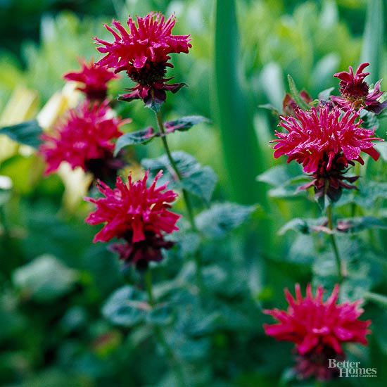 No-Fail Perennials Of The Northeast