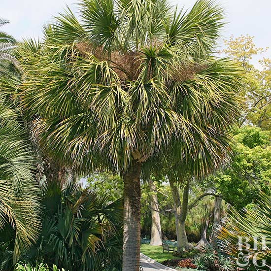 Palm Tree Care Better Homes Gardens