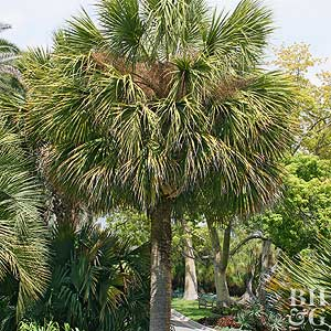 Palm Tree Care Guide