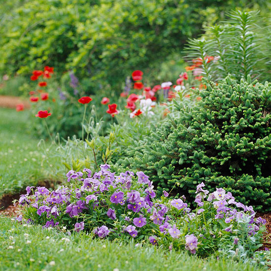 Small Trees For Borders: Use Evergreens To Make An Impact In Your Landscape