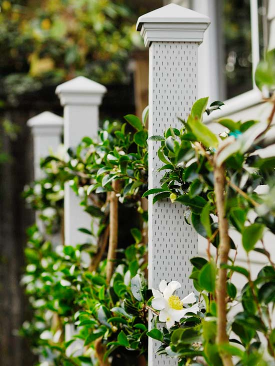 How to Build a Living Fence