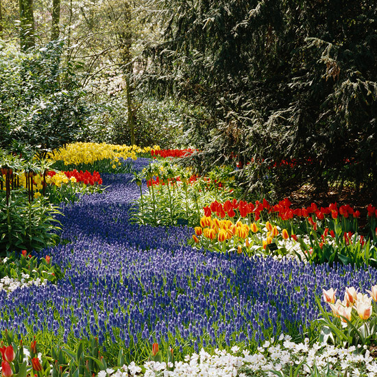 Spring Flowers And Yard Landscaping Ideas 20 Tulip Bed: Bulb Planting Tips From A Dutch Garden