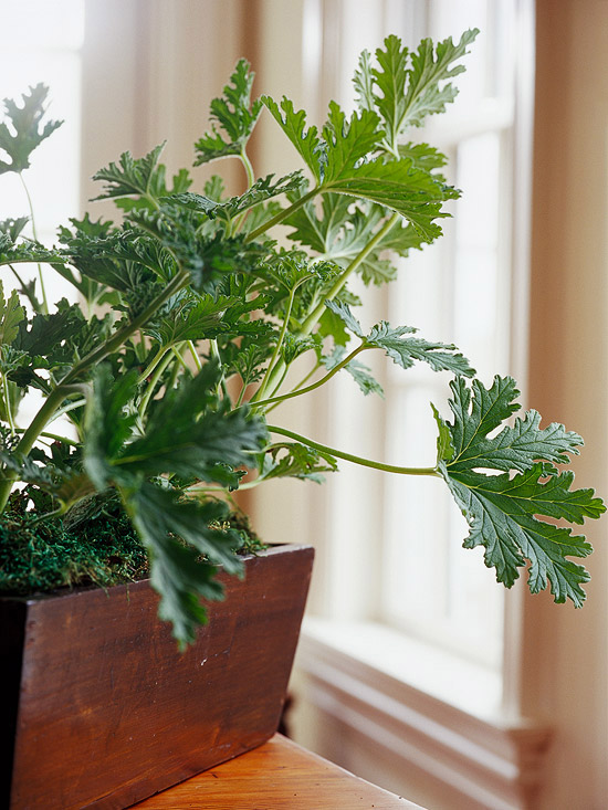 top fragrant houseplants - House Plants