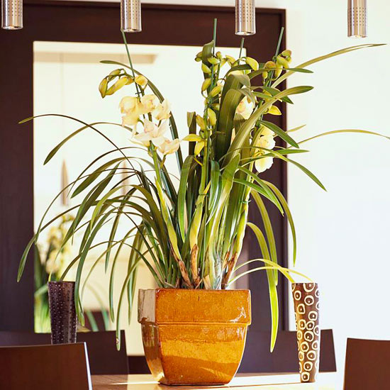 Indoor Plant Lights Better Homes Gardens