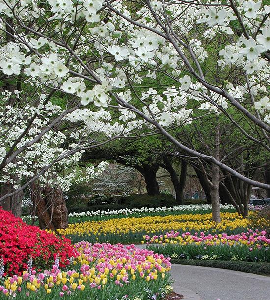 Landscaping Ideas from the Dallas Arboretum