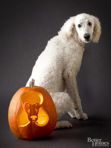 Poodle Pumpkin Stencil