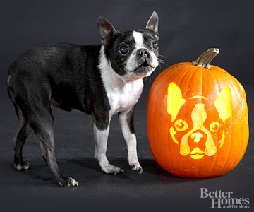 Boston Terrier Pumpkin Stencil