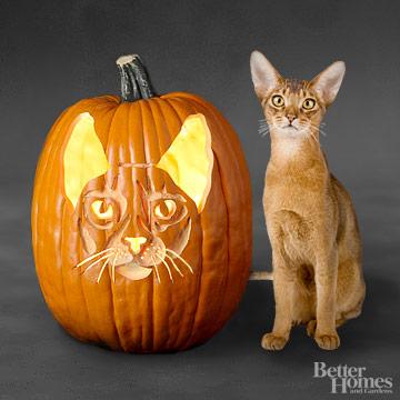Abyssinian Cat Pumpkin Stencil