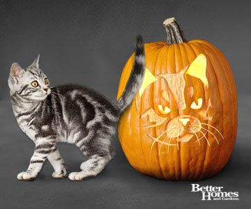 American Shorthair Cat Pumpkin Stencil