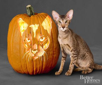 Oriental Cat Pumpkin Stencil