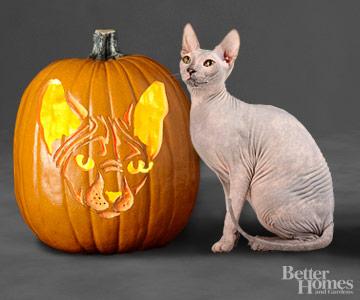 Sphynx Cat Pumpkin Stencil