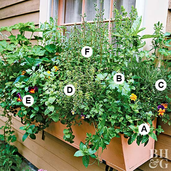 Grow Herbs Out Your Window
