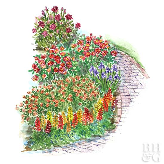 Small Space Rose Garden Plan Better Homes Gardens