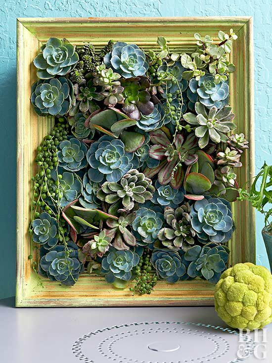 Succulent Picture Painted Frame