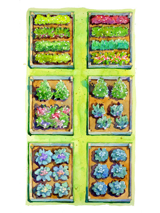 Salad Bar Garden Plan