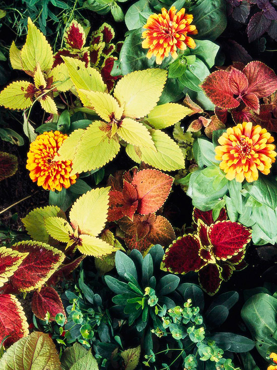 Cheerful Yellow-and-Orange Plant Combinations