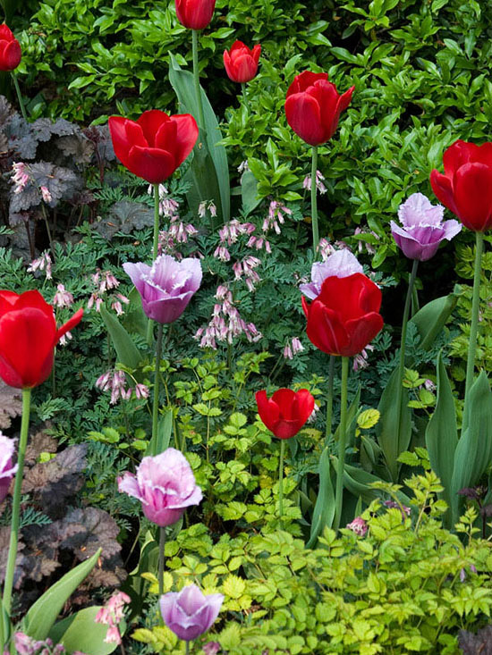 April Gardening Tips for the Pacific Northwest