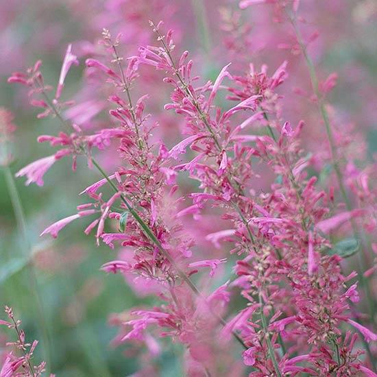 Best Fragrant Flowers for the Desert Southwest