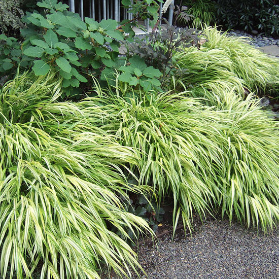 Ornamental grasses in the landscape for Tall border grass