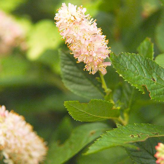 Super Plants For Kentucky Landscapes