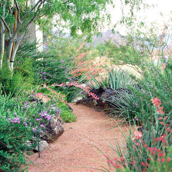 Easy care desert landscaping ideas for Easy care garden shrubs