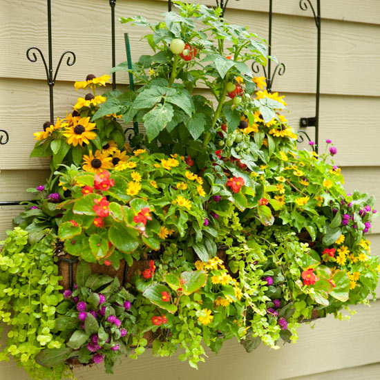 Urban Gardening Solutions