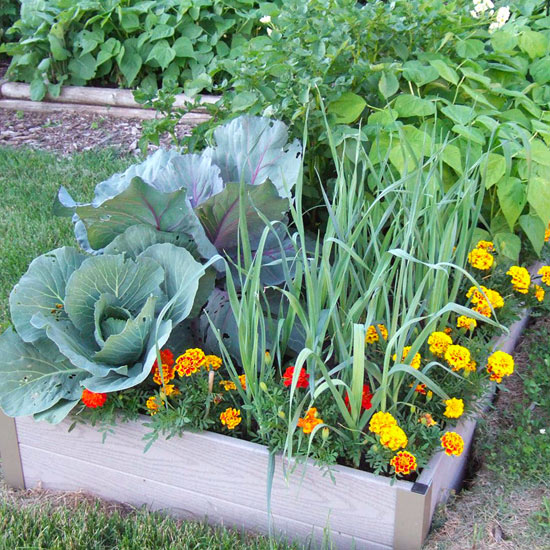 ... Vegetables Are Divided Into Two Groups: Cool Season And Warm Season.  Here Are The Steps You Should Take Into Consideration When Planting  Vegetables.