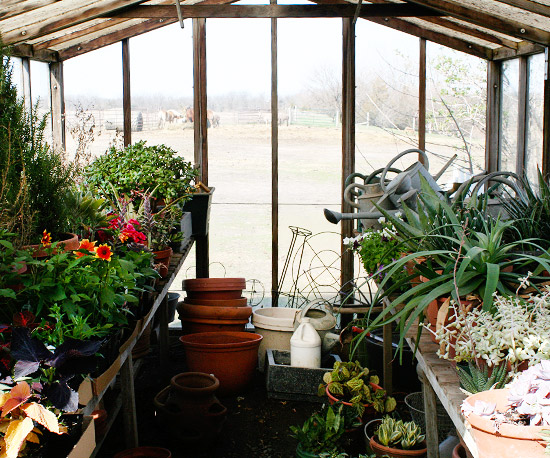 Growing a test garden for Better homes and gardens greenhouse