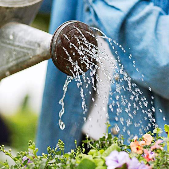 8 Drought-Defying Garden Secrets