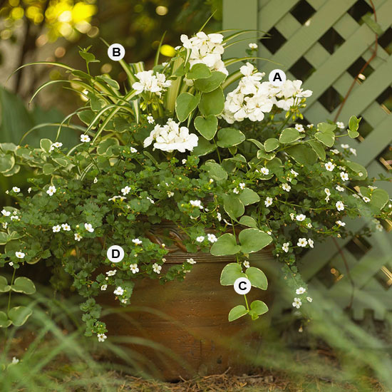 Gift Plants And Plant Ideas Perfect Container Garden For You: Perfect Container Pairings For Geraniums