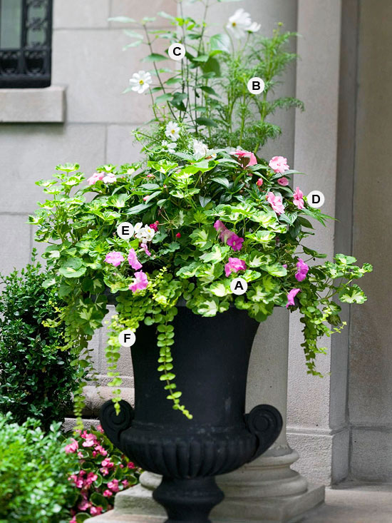 Perfect Container Pairings For Geraniums Better Homes And Gardens