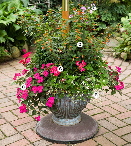 Perfect Container Pairings For Geraniums Better Homes