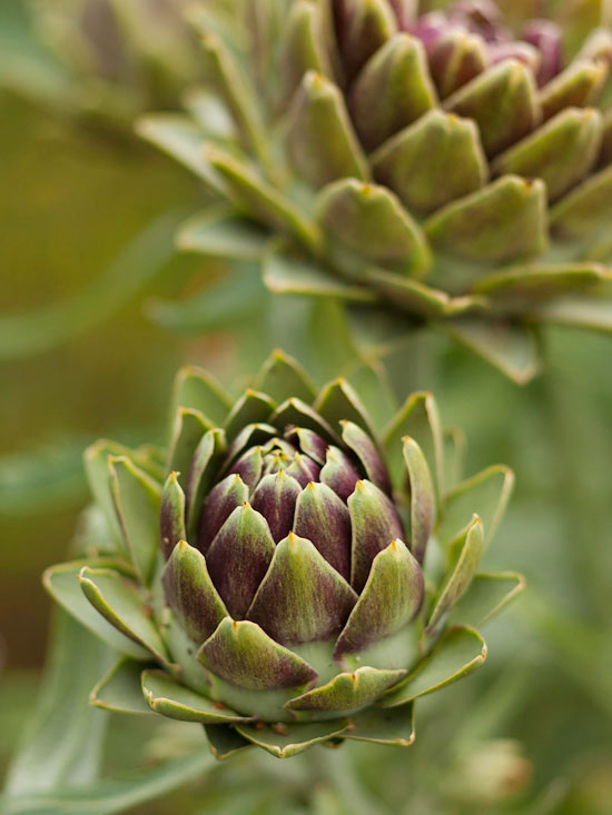Better Homes And Gardens Sweepstakes >> Edible Plants - BHG.com - Better Homes and Gardens