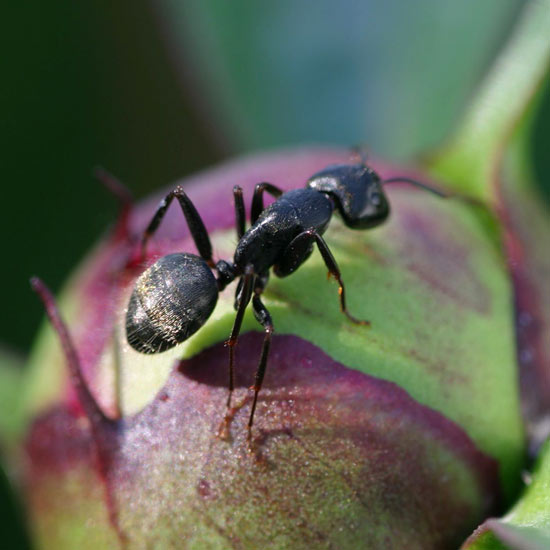 How To Get Rid Of Ants Better Homes Gardens